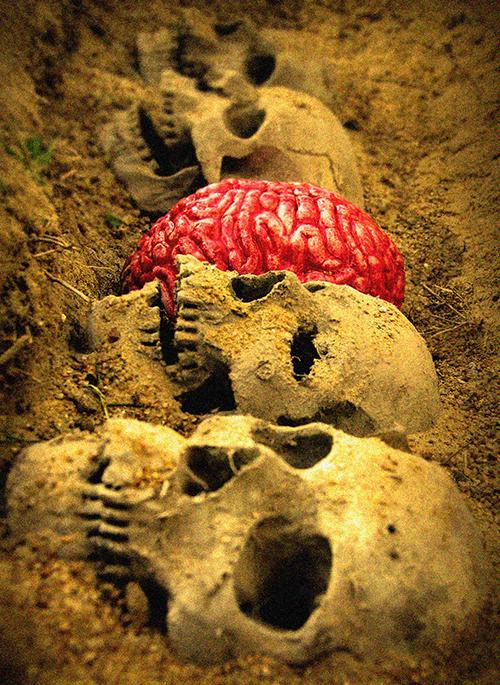 SkullsBrain Smaller